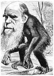 Darwin caricaturé