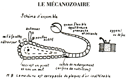 mecanozoaire