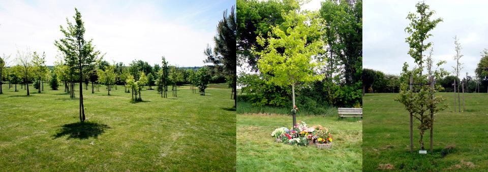 arbres_de_memoire